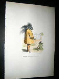 Grandville des Animaux 1842 Hand Col Print. Poor Sleeping Hedgehog